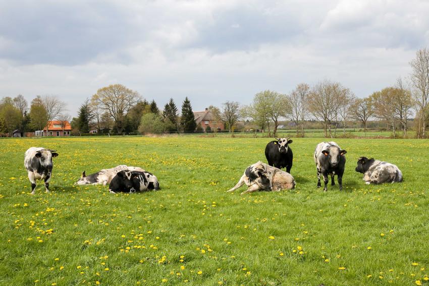 Vleesboerderij eesveen vlees rechtstreeks van de boer II