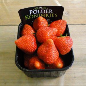 polderkoninkjes aardbeien online bestellen